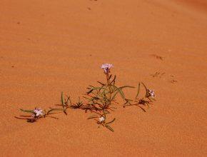 Blume in einer Wüste
